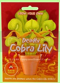 THE COBRA LILIES photo deadly_cobra_lily.jpg